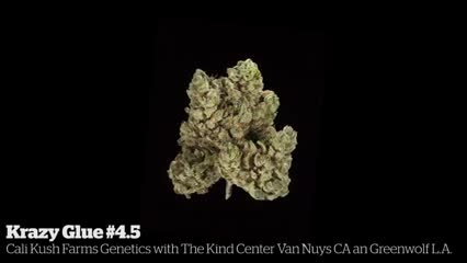 Krazy Glue #4.5          Cali Kush Farms Genetics with The Kind Center Van Nuys CA an Greenwolf L.A.