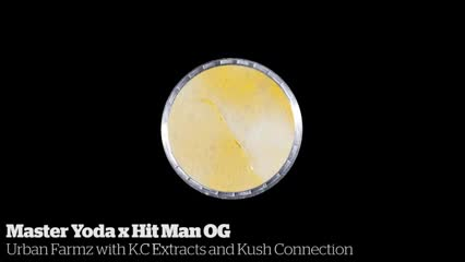 Master Yoda x Hit Man OG         Urban Farmz with K.C Extracts and Kush Connection
