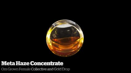 Meta Haze Concentrate        Om Grown Female Collective and Gold Drop