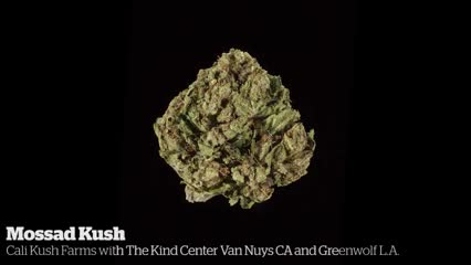 Mossad Kush          Cali Kush Farms with The Kind Center Van Nuys CA an Greenwolf L.A.