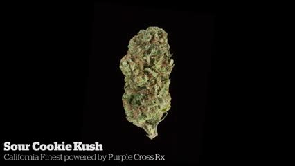 Sour Cookie Kush     California Finest powered by Purple Cross RX